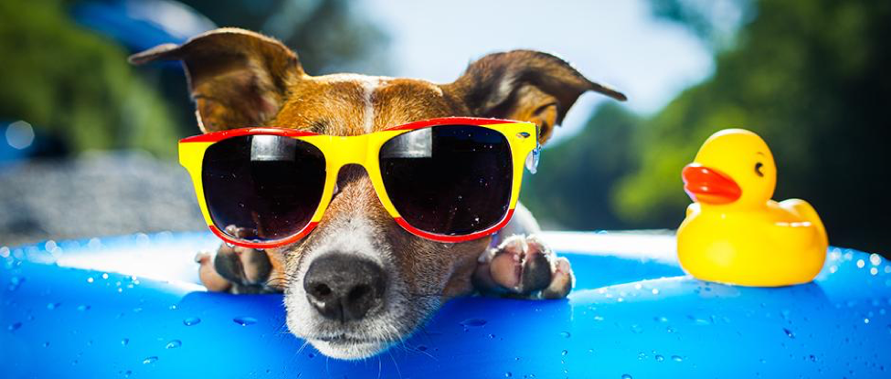 Surviving The Dog Days Of Summer