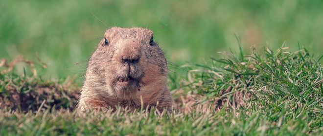 What Groundhog Day Means For Your HVAC System
