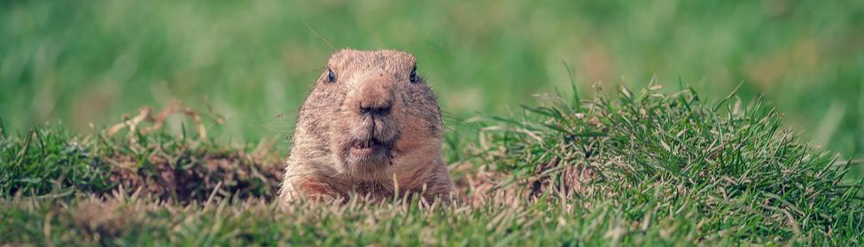 Groundhogs Day - Kotz Heating and Cooling