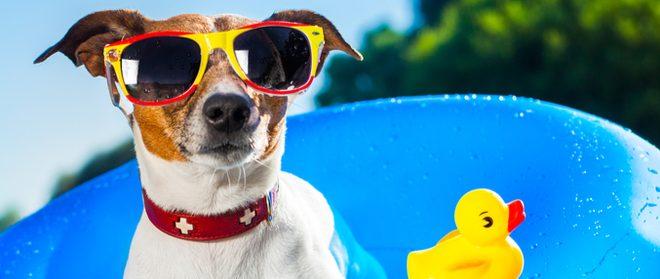 Kotz Can Help Get You Through the Dog Days